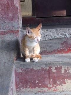 Cat's index ネコ指数