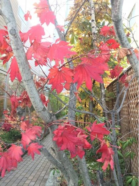 帯広の紅葉、紅葉の帯広