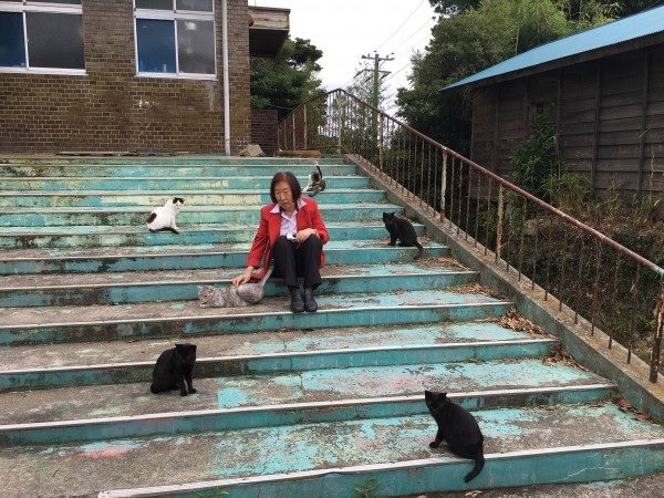 ネコの島田代島 日本のノラ猫その1