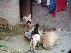 [ネパール]回復者の経済自立促進プロジェクト
